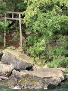 岩を突き抜け生えている苗木