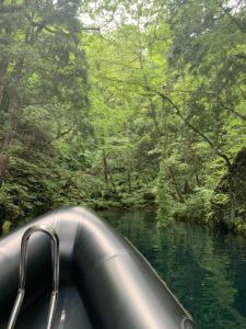 森に少し入った場所の風景