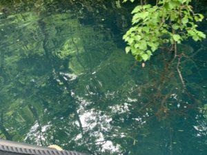 湖の底まで見える水質