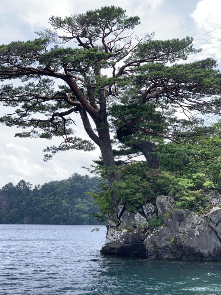 十和田湖の男松、女松。